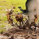 Das Nashorn des Slazhaus FC steckt im Dreck